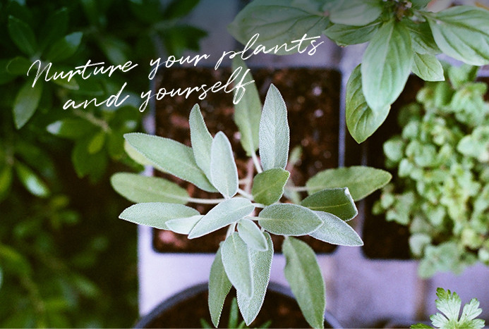 Nourishing plants