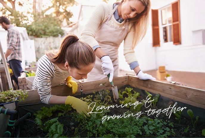 Küchenkräuter anpflanzen