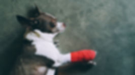 Chihua bandage.jpg