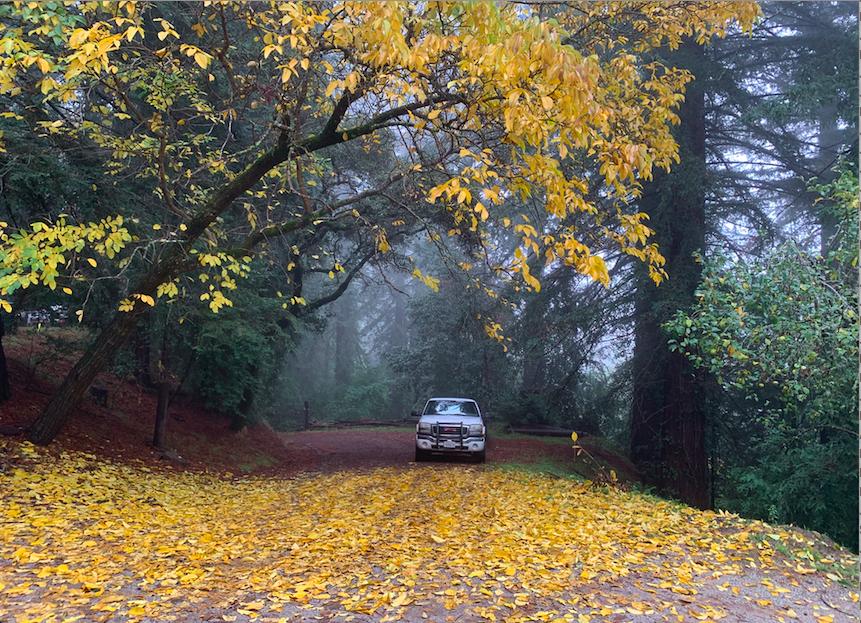 Yellow leaf.jpp