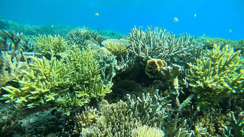 coral-min (1).jpg