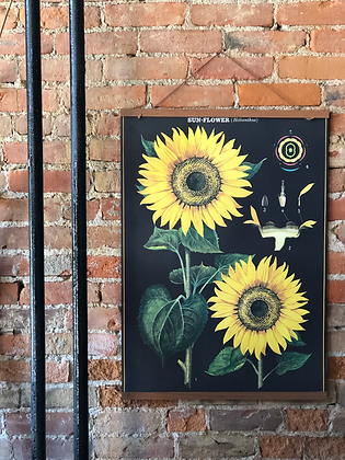 VINTAGE STYLE SUNFLOWERS POSTER
