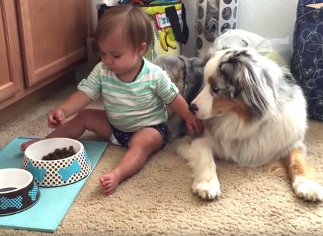 8 Golden DO NOT DO  'Doggie' Rules to Teach Children