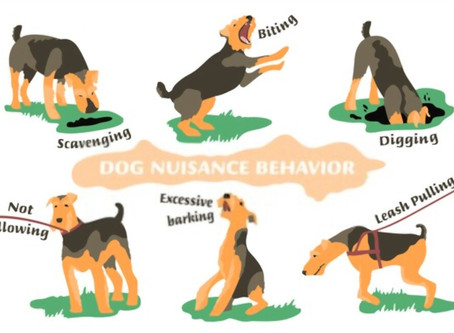 The Reality and Responsibility  of Being a Dog Behaviourist