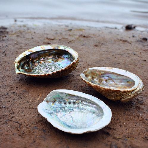 Abalone Shell for Smudge Sticks