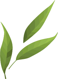 leaf only pieces.png