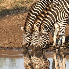 Travel to South Africa with Zephyr Travel