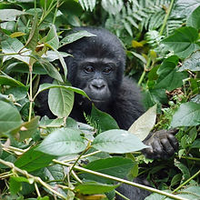 Travel_To_Uganda_See_Gorillas_with Zephy