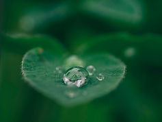 waer pooling on leaf.jpg