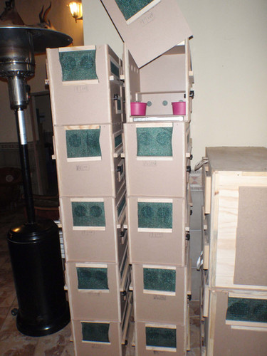 Marmosets crates.jpg