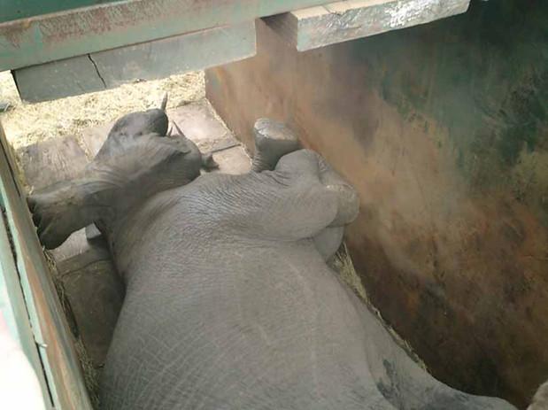 ElephantCap12.jpg