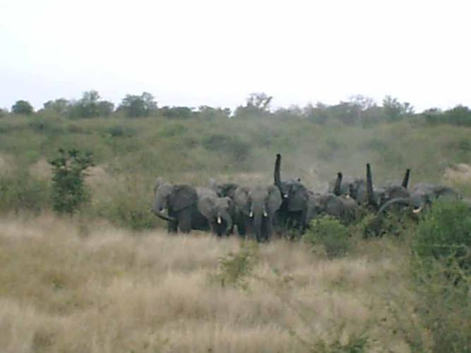 ElephantCap8.jpg