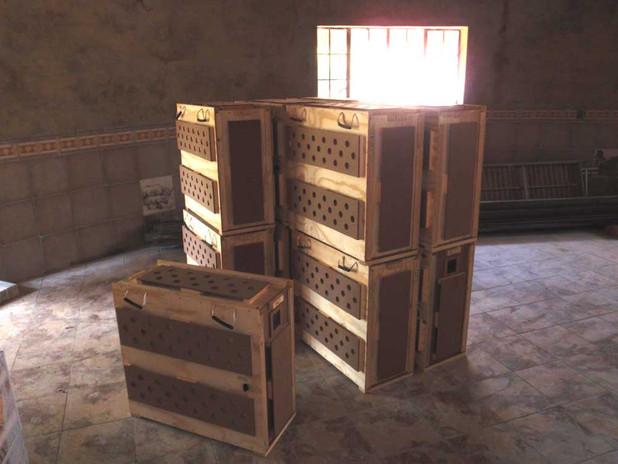 jackal crate1.jpg
