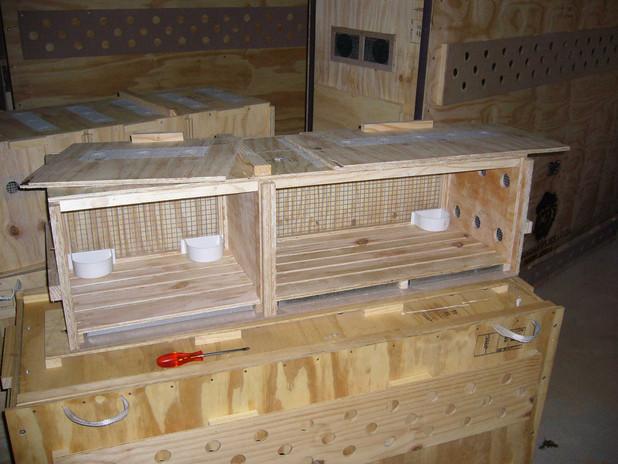 Double meercat crate1.jpg