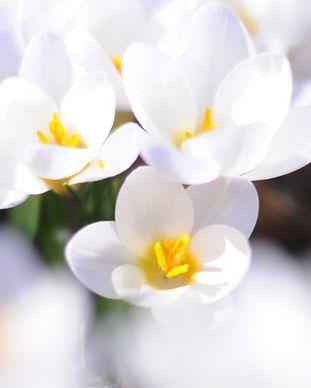 216-awesome-white-flowers-wallpaper.jpg
