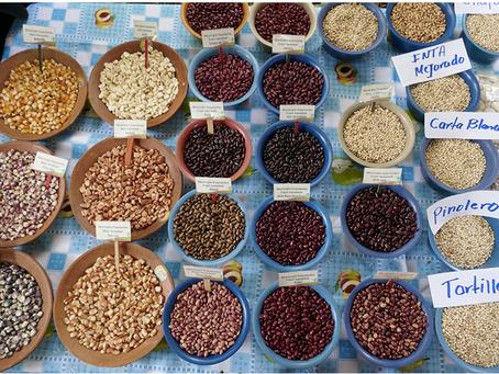Für das Recht auf Saatgut!