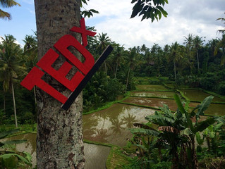 Joining the team at TEDx Ubud!