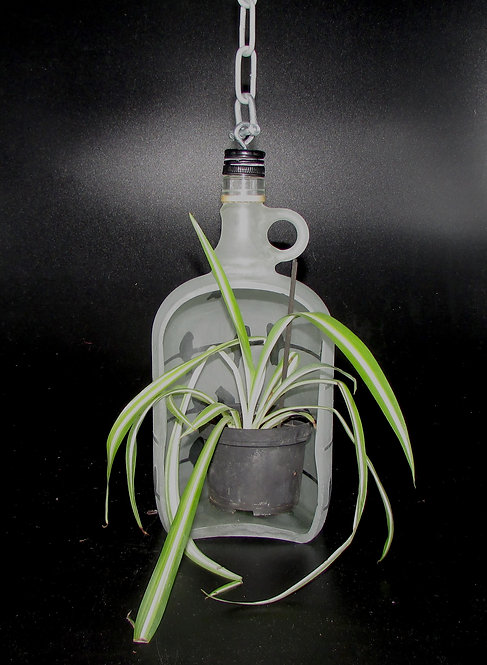 Large Bottle Plant Hanger with Plant