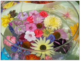 Introducing Flower Essences into my practice...