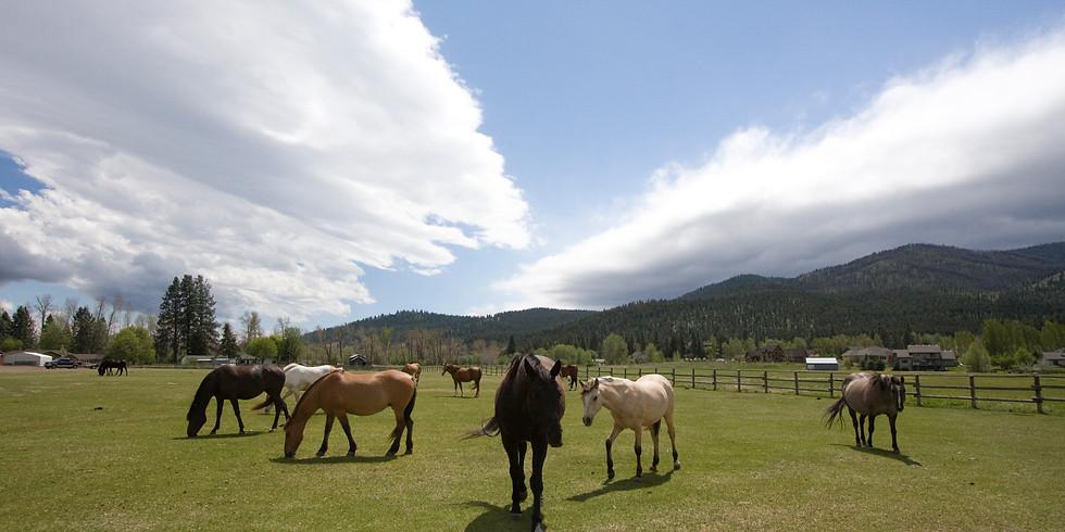 RIVER PINES HORSE SANCTUARY 2-DAY VOLUNTEER TRAINING