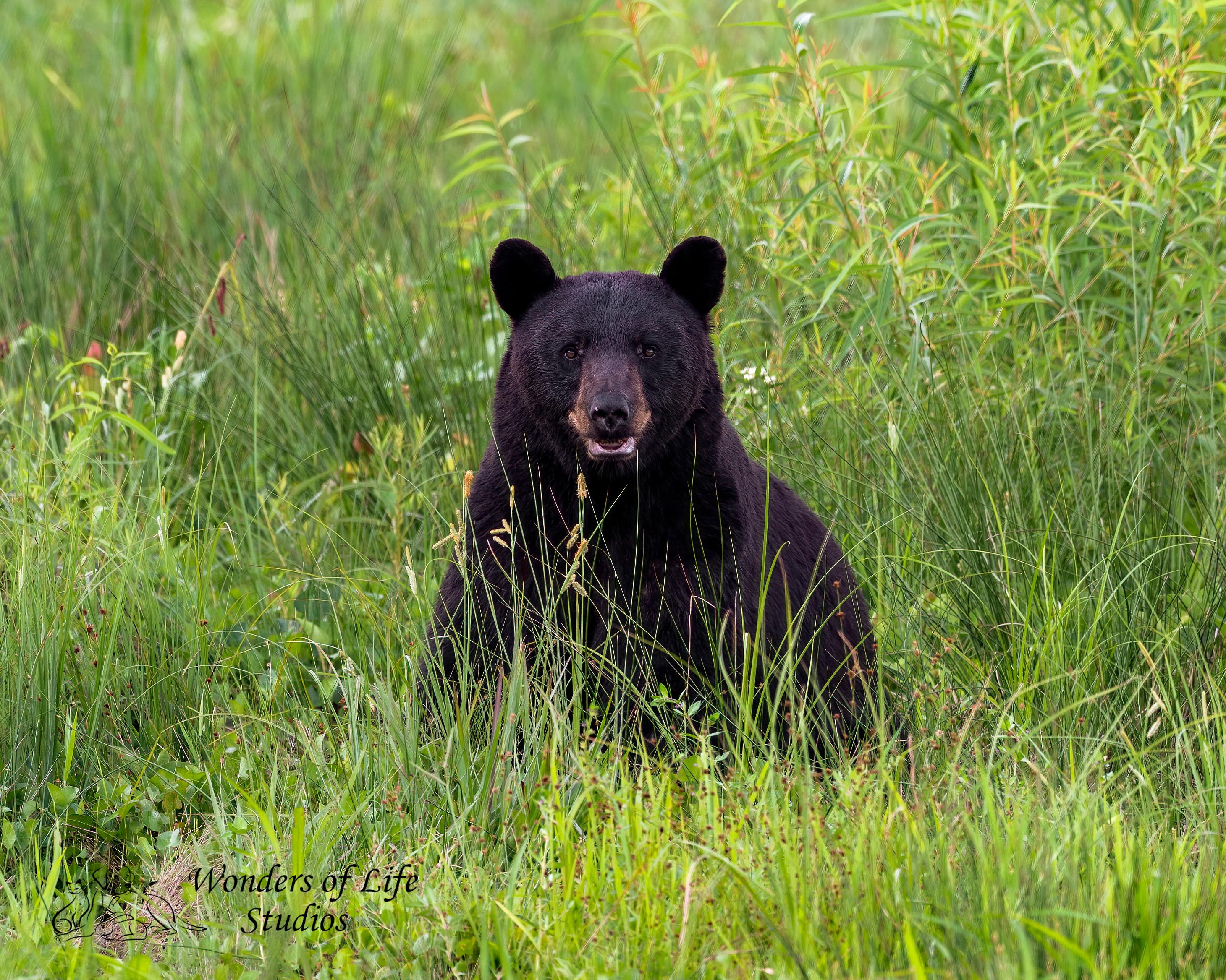 Black Bear workshop full day