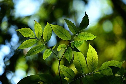 tree-3616892_1920_edited.jpg