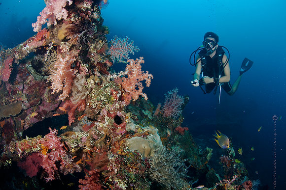 6 to 9 dives   540,000 IDR