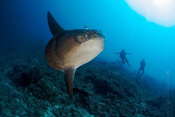 1 a 5 Dives    600,000 IDR