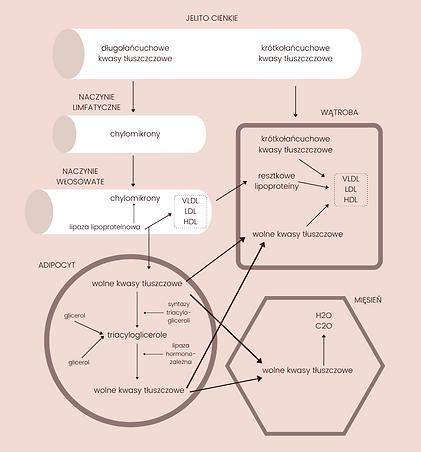 Nutripedia - schematy-kopia.png