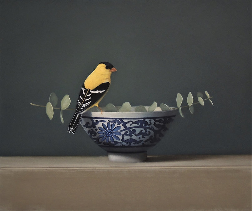 8american goldfinch