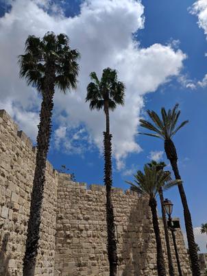 Palm trees in the sky near a Jerusalem stone wall