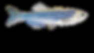 Logo curso zebrafish 2.png