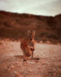 australia-327_052_edited.jpg
