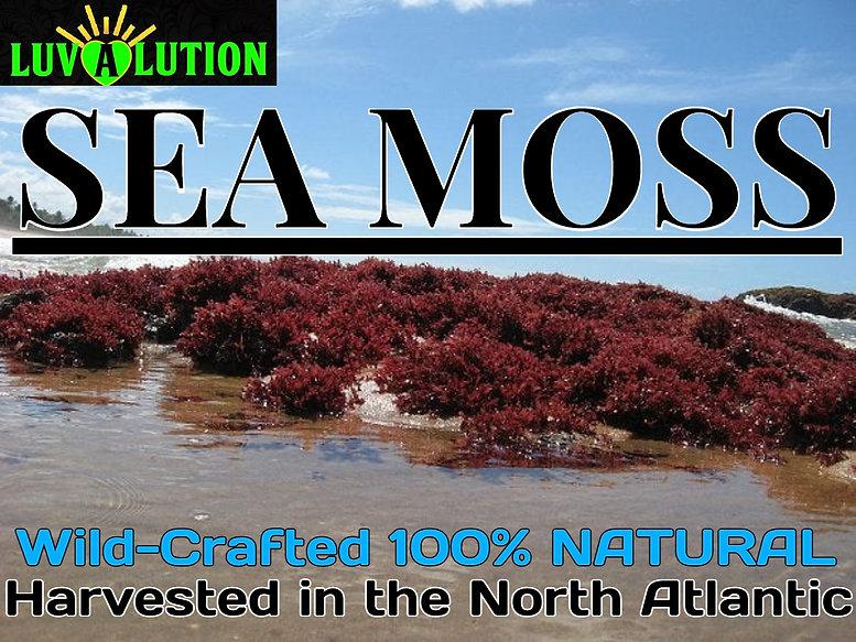 Sea moss.jpeg