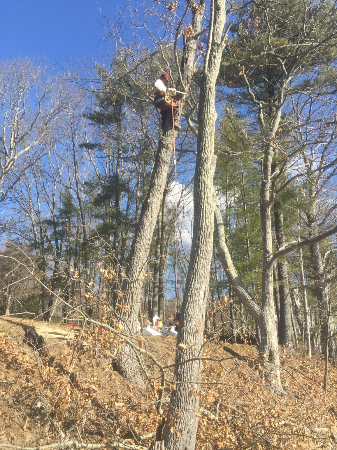 New England Land & Tree Careing