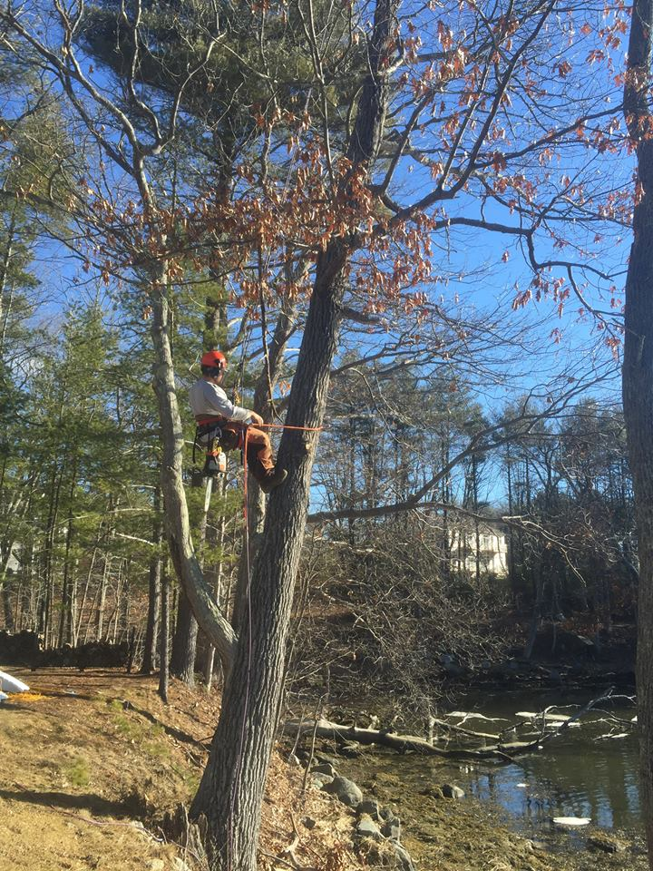 New England Land & Tree Care
