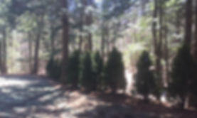 New England Land & Tree Care- Madbury, Lee, Durham, Barrington, Newmarket, Dover, Rollinsford and Stratham