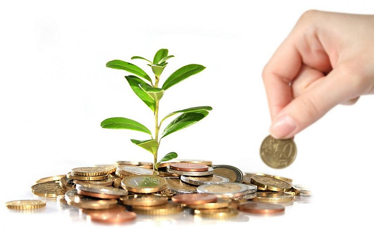 plant cash.jpg