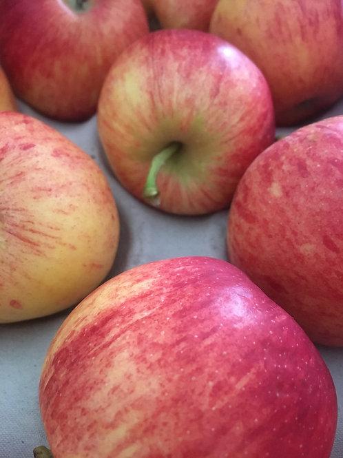 Royal Gala Apples 1Kg