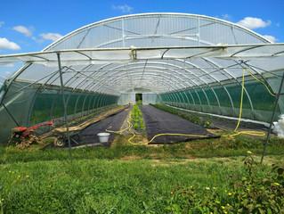 LES AUXONS - Visite de l'exploitation agricole « Aux sons du potager »