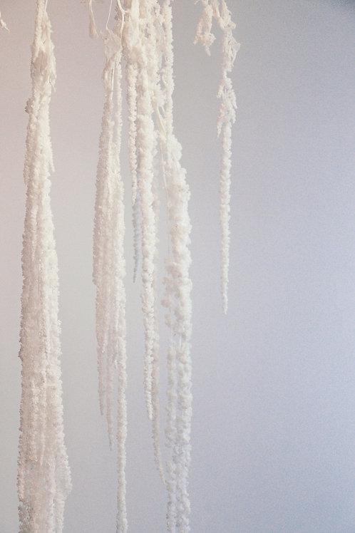 Dried Amaranthus