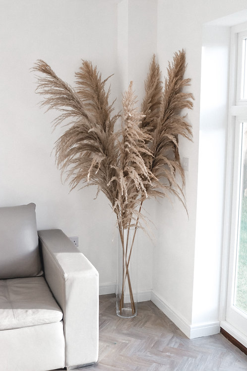 Pampas Grass (supersize)