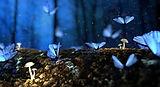 borboletas-1-830x450.jpg