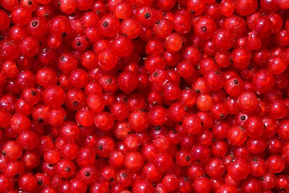 דומדמניות אדומות מוקפאות