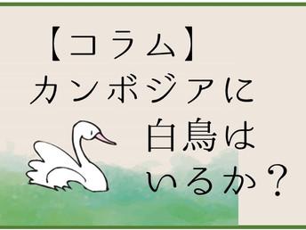 超・日本語話者、オット~カンボジアに白鳥はいるか?