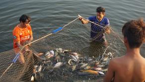 カンボジアは乾季です!