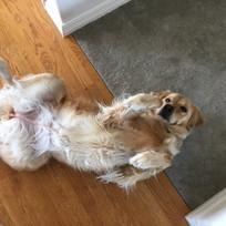 Kirstie wants some belly lovin