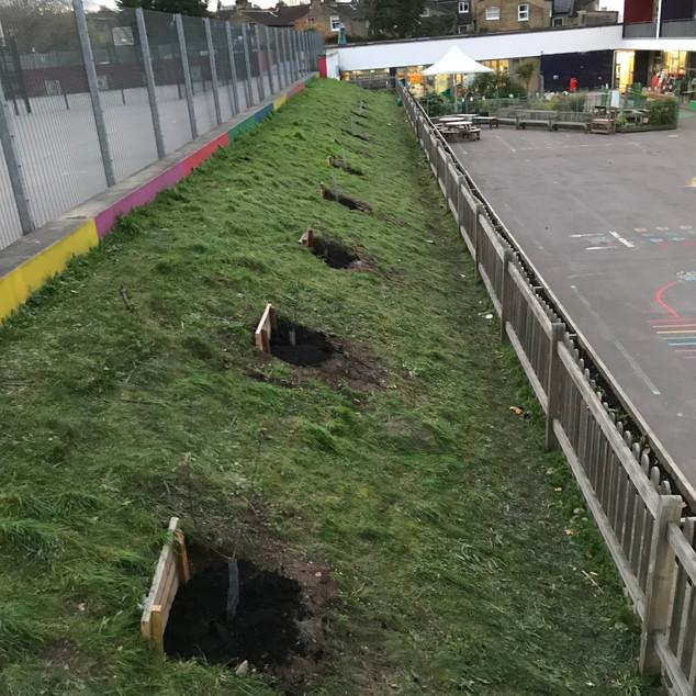 Tree_planting_1