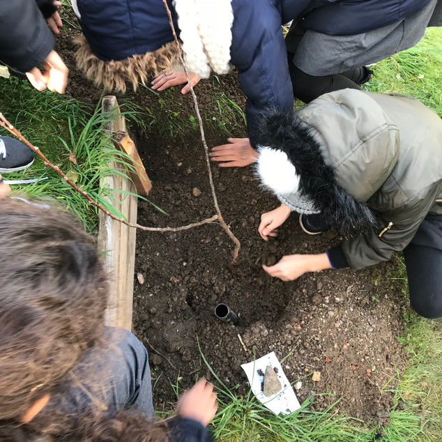 Tree_planting_2