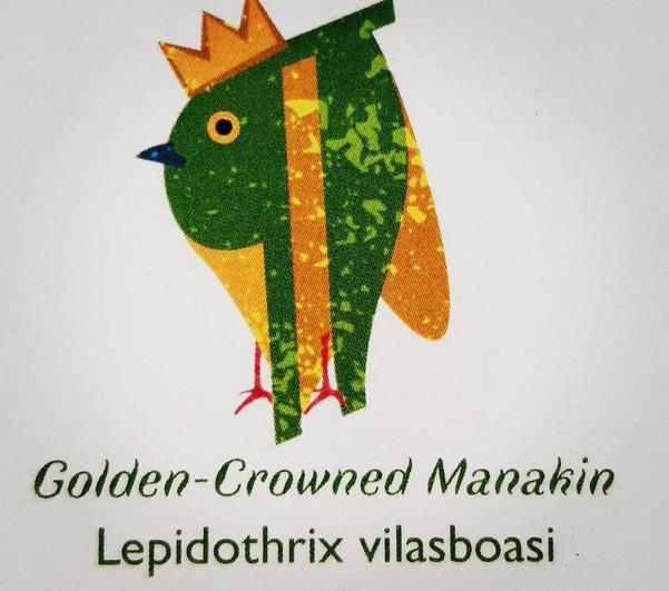 Golden-Crowned Manakin Pilcrow